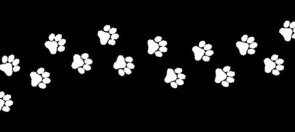 patinhas (2)